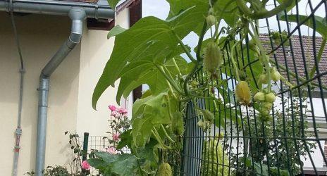 Iz našeg vrta
